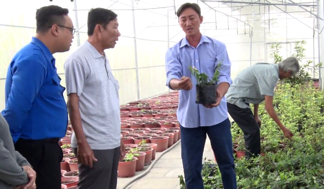 Tiền Giang: Liều trồng sâm tiến vua, ông nông dân bất ngờ thành tỷ phú - 1