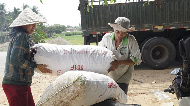 Nông dân Bình Định khóc ròng vì giá ớt tuột tận đáy - 7