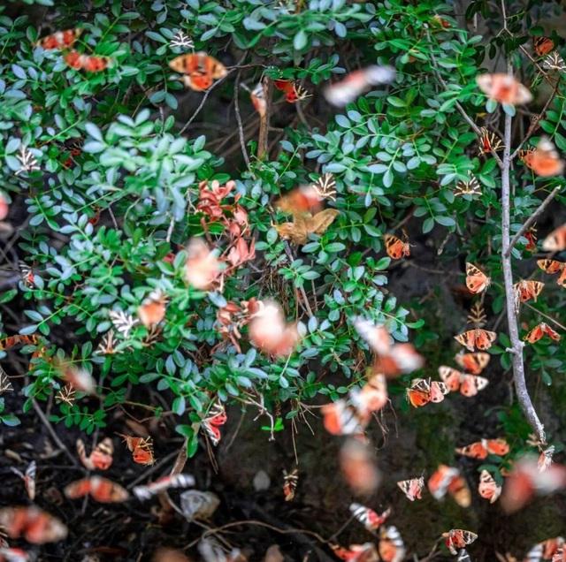 Sửng sốt vẻ đẹp siêu thực của thung lũng bươm bướm ở Hy Lạp - 2