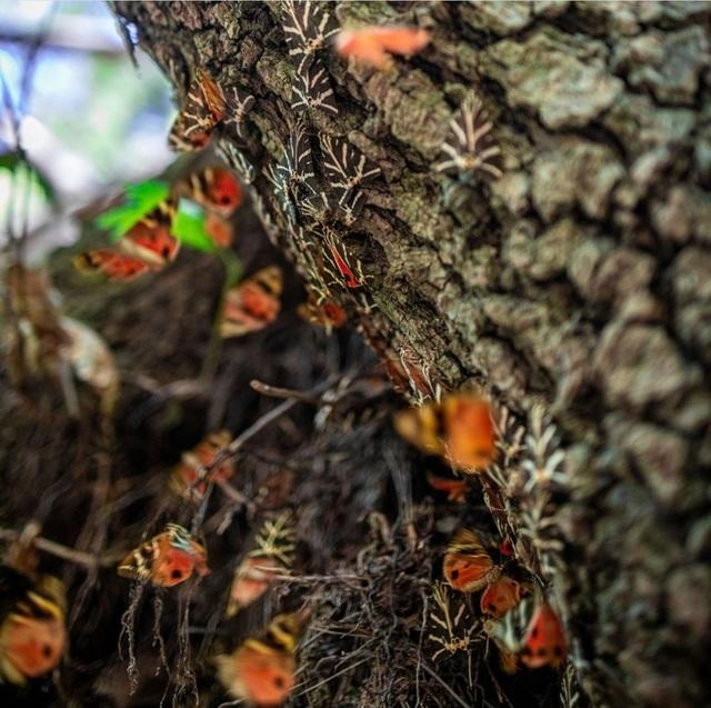 Sửng sốt vẻ đẹp siêu thực của thung lũng bươm bướm ở Hy Lạp - 3