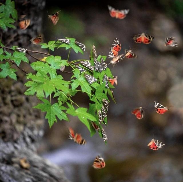 Sửng sốt vẻ đẹp siêu thực của thung lũng bươm bướm ở Hy Lạp - 4