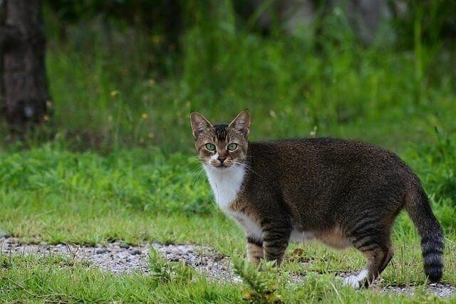 Túi nguyên thủy ở bụng mèo và những điều chưa biết - 1