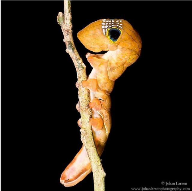 Tròn mắt kinh ngạc xem sâu bướm có mặt hình sọ người ghê sợ - 1