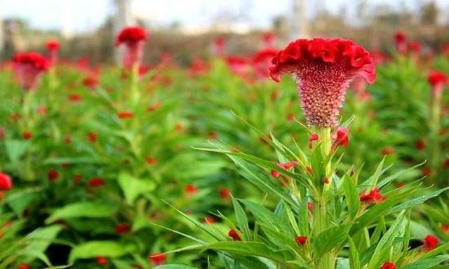 Hạt giống Việt Nam được đưa lên trồng trên vũ trụ - 1