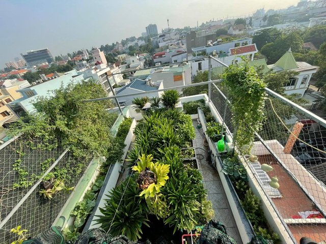 Ông bố đảm tự nuôi cá, trồng rau trĩu trịt trên sân thượng ở Sài Gòn - 1