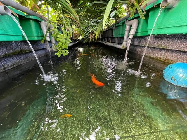 Ông bố đảm tự nuôi cá, trồng rau trĩu trịt trên sân thượng ở Sài Gòn - 8