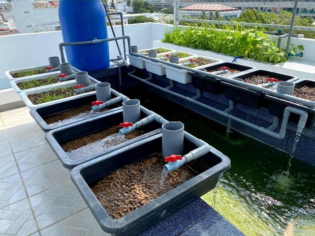 Ông bố đảm tự nuôi cá, trồng rau trĩu trịt trên sân thượng ở Sài Gòn - 3