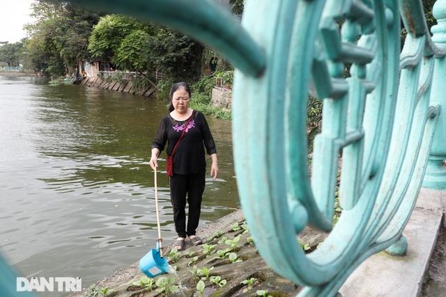 Ám ảnh rau bẩn, người Hà Nội rủ nhau trồng rau hốc đá quanh hồ Tây - 13