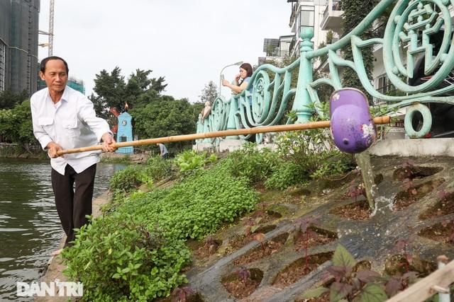 Ám ảnh rau bẩn, người Hà Nội rủ nhau trồng rau hốc đá quanh hồ Tây - 11