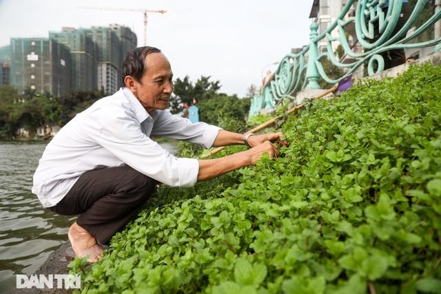 Ám ảnh rau bẩn, người Hà Nội rủ nhau trồng rau hốc đá quanh hồ Tây - 1