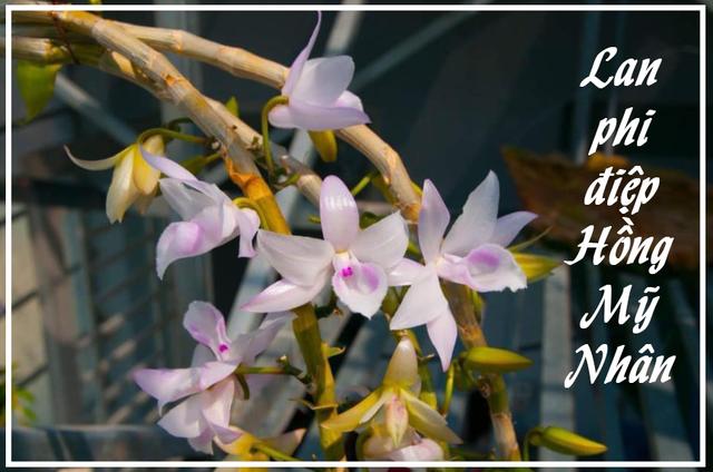 Lan đột biến là hoa gì mà làm bùng lên cơn sốt bạc tỷ của người Việt? - 1