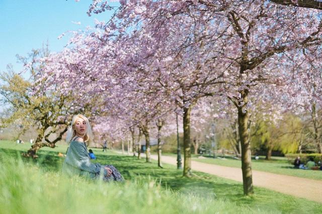 Mùa hoa anh đào đẹp nao lòng qua góc nhìn nữ sinh Việt tại Anh - 6