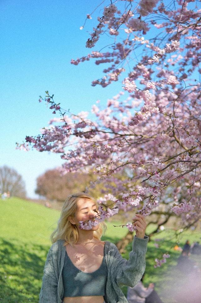 Mùa hoa anh đào đẹp nao lòng qua góc nhìn nữ sinh Việt tại Anh - 7
