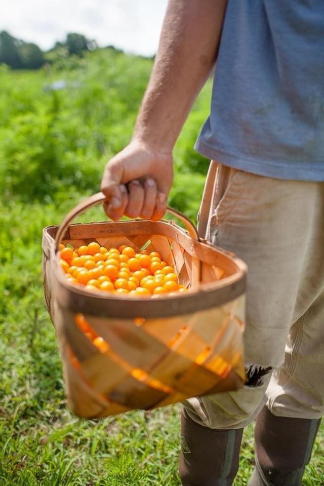 Ông bố 4 con về quê trồng rau, nuôi gà để giúp đỡ cộng đồng - 6