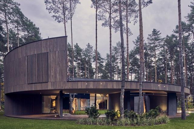 Ngôi nhà hình khúc cây ẩn giữa rừng thông  - 8