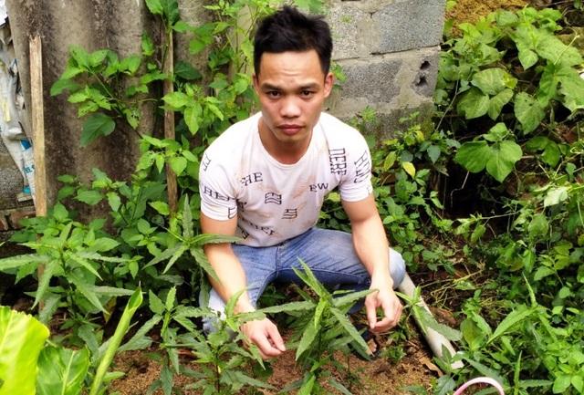 Ba thanh niên trồng cần sa trong vườn để... nuôi gà chọi - 1