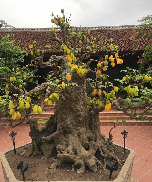 Biệt phủ 1.700m2 toàn cây cảnh bạc tỷ của gia đình ở Nam Định - 7