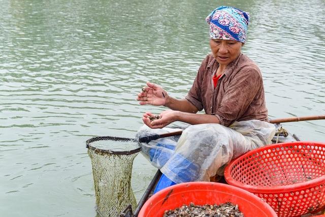Nhọc nhằn nghề cào hến trên sông Lèn - 4