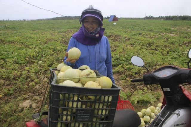 Người dân Quảng Trị thu tiền triệu mỗi ngày nhờ bán dưa - 5