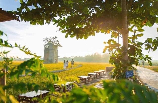 Độc đáo quán cà phê Lò gạch cũ nằm giữa cánh đồng lúa xanh ngát - 6