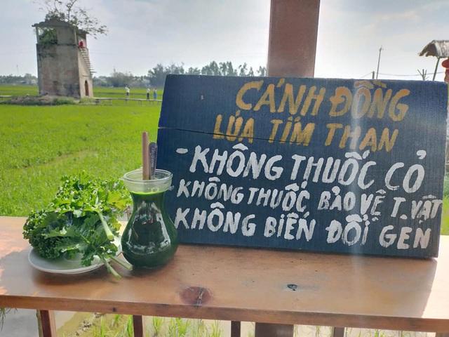Độc đáo quán cà phê Lò gạch cũ nằm giữa cánh đồng lúa xanh ngát - 7