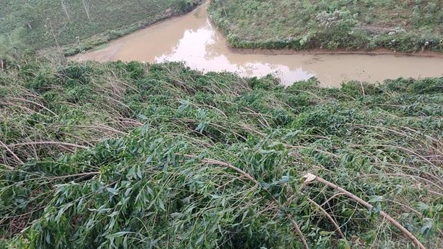 Trên địa bàn 2 xã Cao Sơn và Lĩnh Sơn không có thiệt hại về nhà cửa nhưnghàng chục ha hoa màu và cây nguyên liệu bị gãy đổ, hư hỏng.