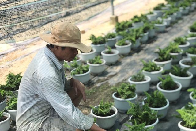 Bỏ phụ hồ về trồng hoa giấy, lão nông thu 500 triệu đồng mỗi năm - 4