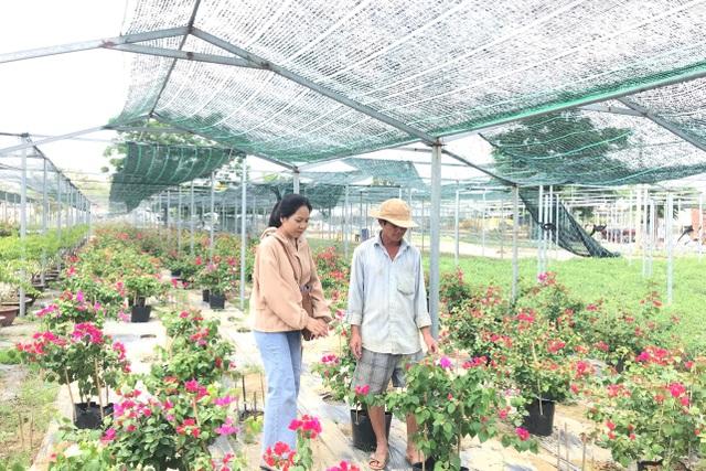 Bỏ phụ hồ về trồng hoa giấy, lão nông thu 500 triệu đồng mỗi năm - 2