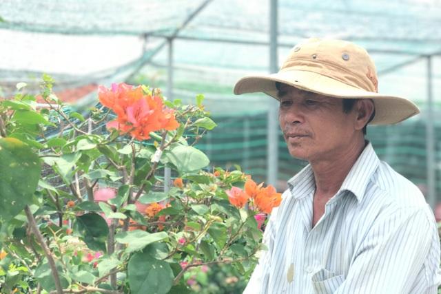 Bỏ phụ hồ về trồng hoa giấy, lão nông thu 500 triệu đồng mỗi năm - 1