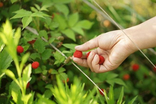 Cặp vợ chồng bỏ việc, bán nhà phố về quê chăm hoa, trồng rau sạch - 7