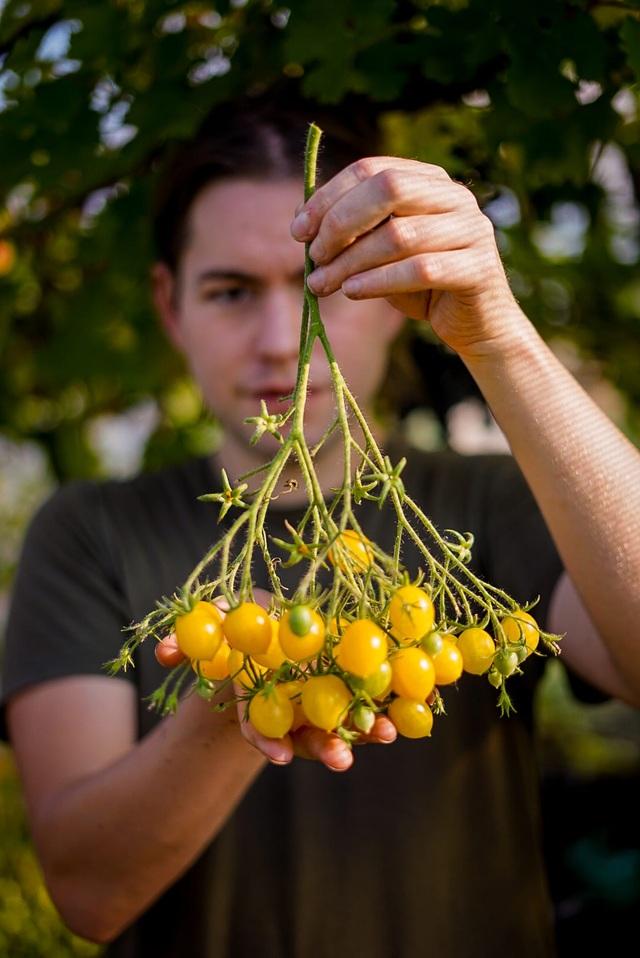 Vườn rau ngon, trái ngọt muốn ăn lúc nào cũng có của chàng trai phố thị - 2