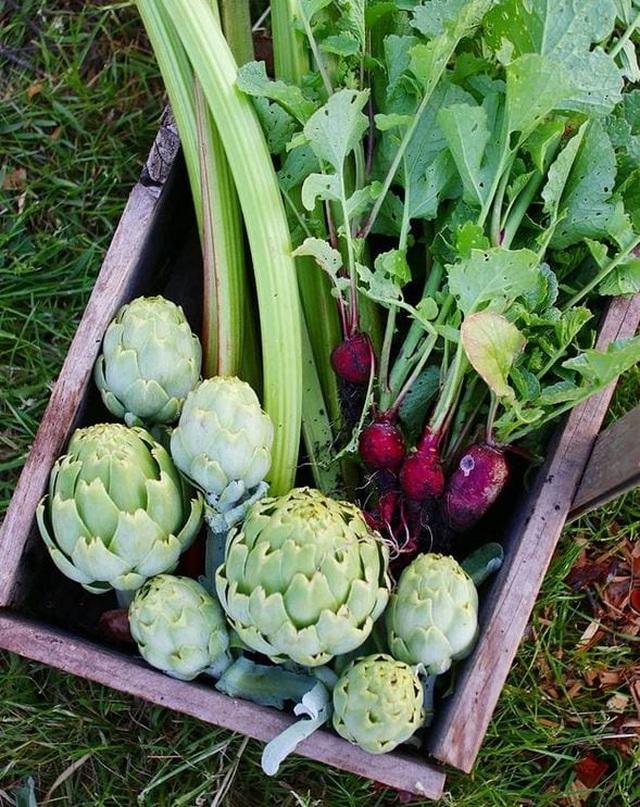 Vườn rau ngon, trái ngọt muốn ăn lúc nào cũng có của chàng trai phố thị - 4