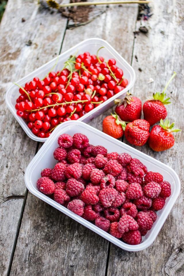 Vườn rau ngon, trái ngọt muốn ăn lúc nào cũng có của chàng trai phố thị - 7