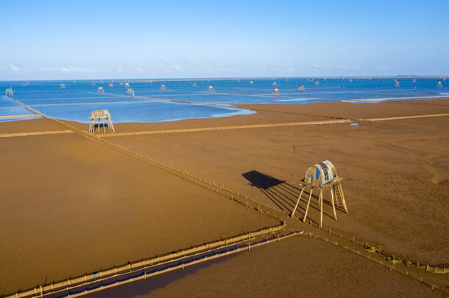 Sửng sốt vẻ đẹp của cánh đồng nuôi ngao trên bãi biển Thái Bình - 1