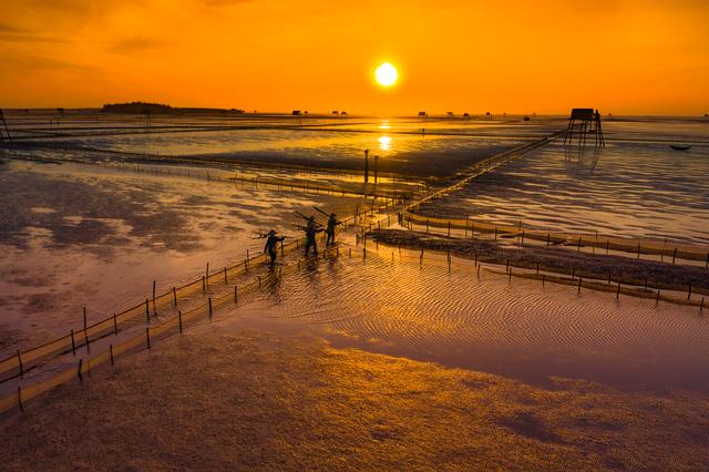 Sửng sốt vẻ đẹp của cánh đồng nuôi ngao trên bãi biển Thái Bình - 5