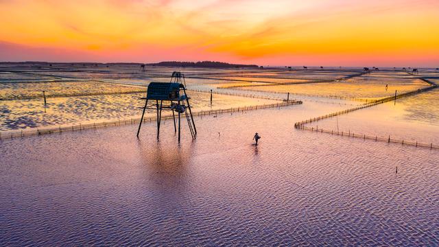 Sửng sốt vẻ đẹp của cánh đồng nuôi ngao trên bãi biển Thái Bình - 6