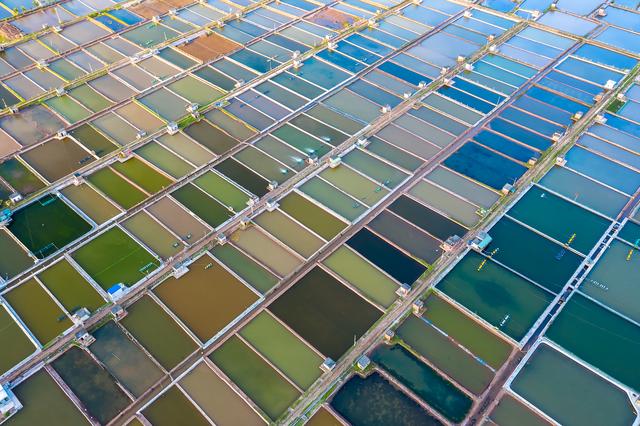 Sửng sốt vẻ đẹp của cánh đồng nuôi ngao trên bãi biển Thái Bình - 9