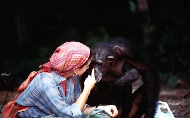 Lạ lùng người phụ nữ vào rừng sống kiểu tinh tinh trong 7 năm - 4