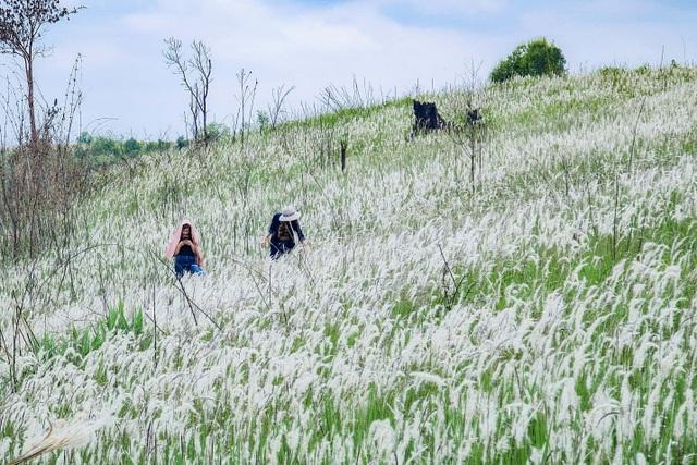 Thiếu nữ HMông khoe sắc xinh đẹp bên đồi cỏ tranh trắng muốt Đắk Nông - 2