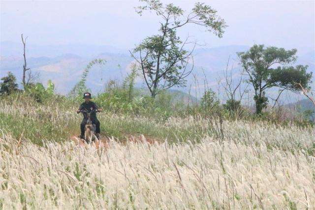 Thiếu nữ HMông khoe sắc xinh đẹp bên đồi cỏ tranh trắng muốt Đắk Nông - 10