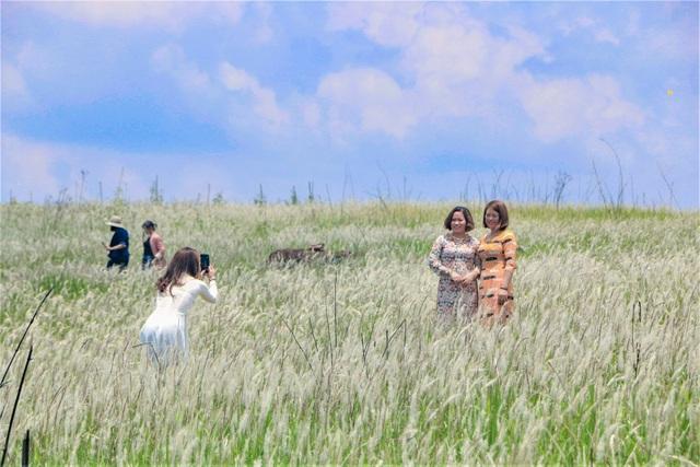 Thiếu nữ HMông khoe sắc xinh đẹp bên đồi cỏ tranh trắng muốt Đắk Nông - 4