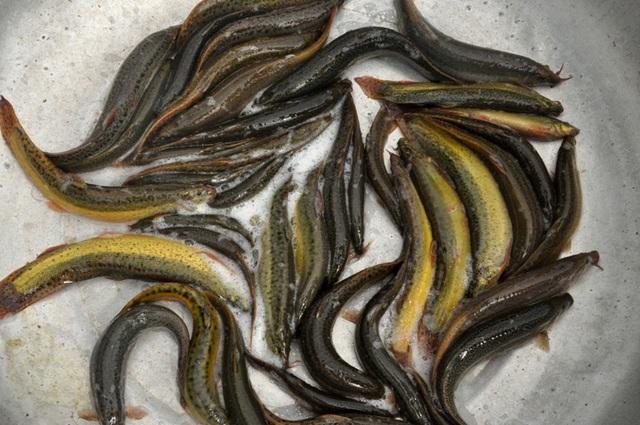 8X bỏ nghề điều dưỡng về quê làm bạn với ốc, cá, kiếm nửa tỷ đồng mỗi năm - 5