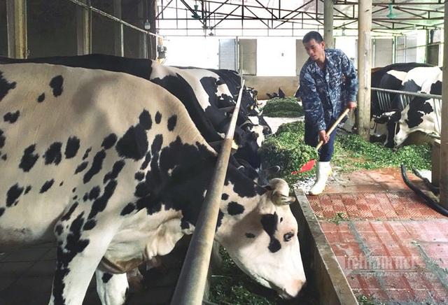 Liều vay 300 triệu đồng làm ăn, 9 năm sau anh nông dân đếm tiền tỷ - 3