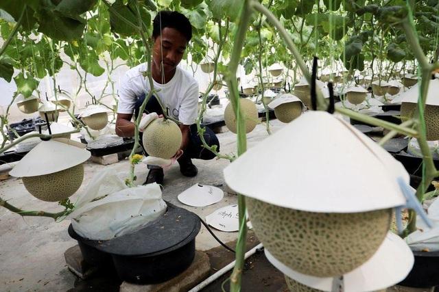 Lạ lùng nông dân mát-xa, bật nhạc trồng loại dưa có giá đắt như vàng - 2