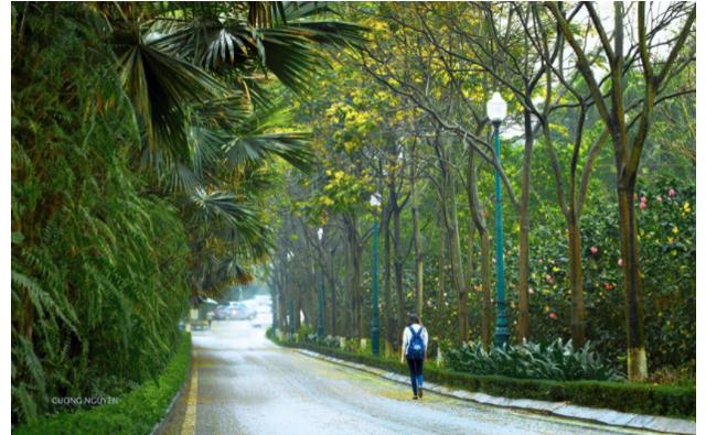 Cung đường chạy đẹp nhất Việt Nam tại Ecopark Marathon - 24