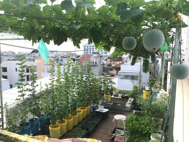 Vườn sân thượng rau trái lạ có kích thước khổng lồ của ông bố Sài Gòn - 1