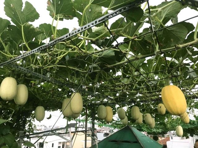 Vườn sân thượng rau trái lạ có kích thước khổng lồ của ông bố Sài Gòn - 2
