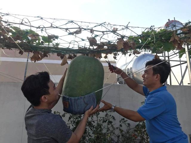 Vườn sân thượng rau trái lạ có kích thước khổng lồ của ông bố Sài Gòn - 11