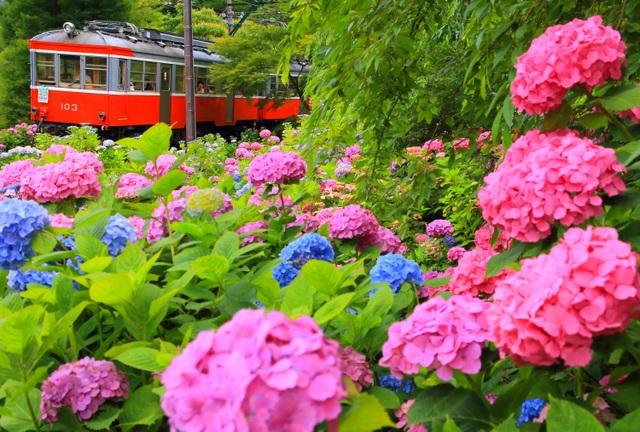 Những chuyến tàu hỏa thơ mộng nhất xứ sở hoa anh đào - 5