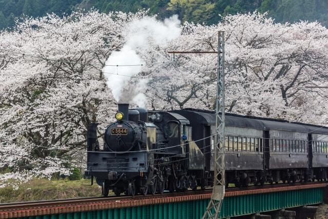 Những chuyến tàu hỏa thơ mộng nhất xứ sở hoa anh đào - 1
